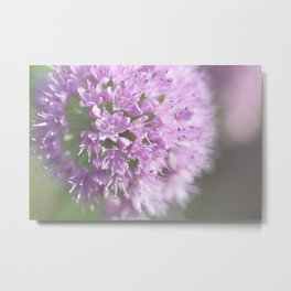 Allium - Onion Flower 1 Metal Print