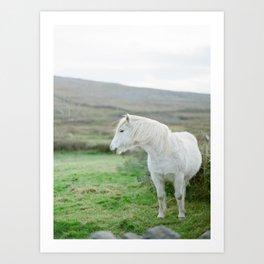 Irish Horse Art Print