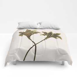 Indian Lily Daffodil Comforters