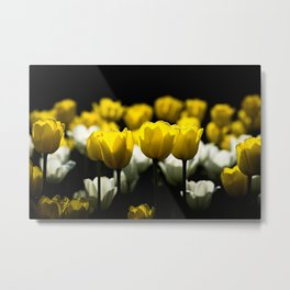 Tulips Yellow And White Metal Print