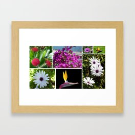 Collage of Maderian Flowers, Framed Art Print