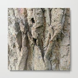 Tree Grooves, photography Metal Print