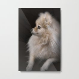 Willow The Pretty Pomeranian Puppy Metal Print