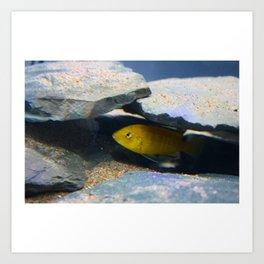 Yellow Lab African Cichlid Fish Art Print