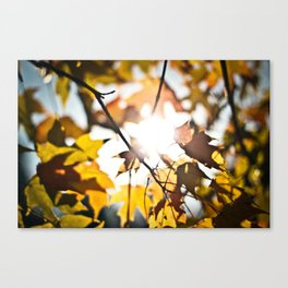 October Canvas Print