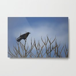Winter Crow in Tree Metal Print