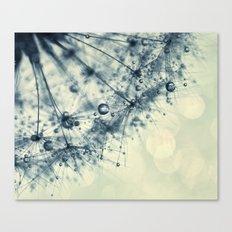 dandelion blue dan Canvas Print