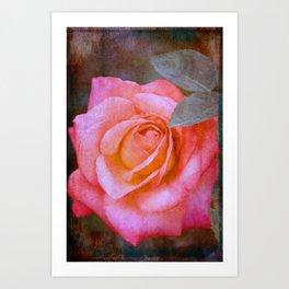 Rose 289 Art Print