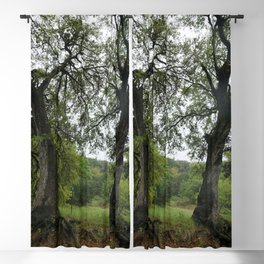 Oak Gateway Blackout Curtain