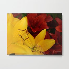 """""""A Gathering of Lilies"""" - 2 [D4466~24] Metal Print"""