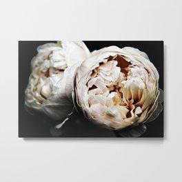 Cream Bourbon Roses Metal Print