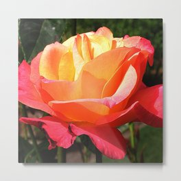 The Subject is Roses, 102 Metal Print