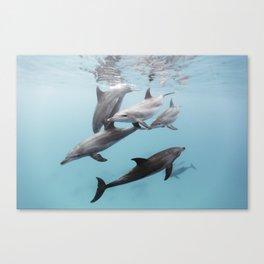 170503-8725 Canvas Print
