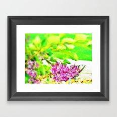 butterfly glory Framed Art Print