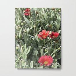 Red Daisy Botanical Metal Print
