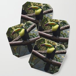 National Aviary - Pittsburgh - Keel Billed Toucan 1 Coaster