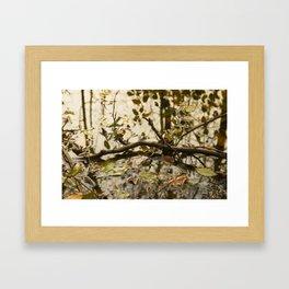 swamp I Framed Art Print