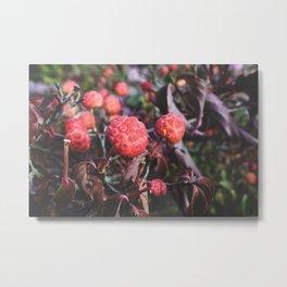 Bright Berries I - Macro Nature Photography Metal Print