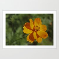 rileigh smirl Art Prints featuring Orange Flower by Rileigh Smirl