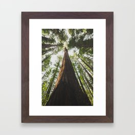 A Big Hendy Woods Redwood Framed Art Print