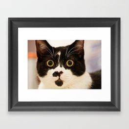 Pussy cat, pussy cat Framed Art Print