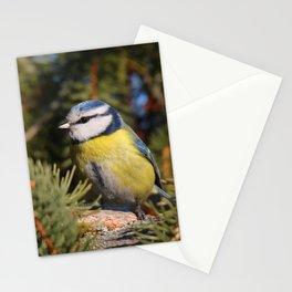 Blue tit resting on a branch conifer Stationery Cards