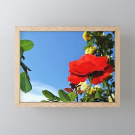 Red rose in a garden Framed Mini Art Print