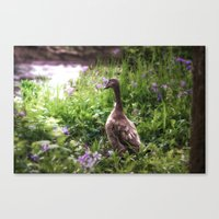 duck Canvas Prints featuring Duck by Terri Ellis
