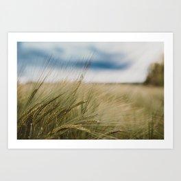 Grass Field on a Sunny Day Art Print