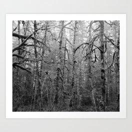 Olympic Rainforest - B&W Art Print