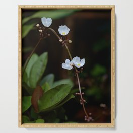 White flowers of aquatic plants Serving Tray