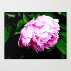Dripping Pink Canvas Print