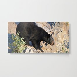 Black bear on a cliff in Jasper National Park Metal Print