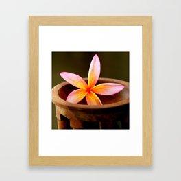 Plumeria in Kava Bowl Framed Art Print