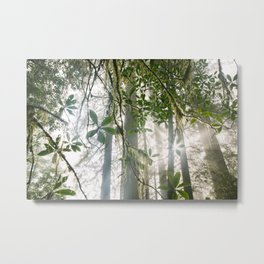 Redwood and Rhododendron Forest Metal Print