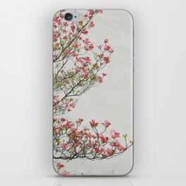 Pink Blossoms Against a White Wall iPhone Skin