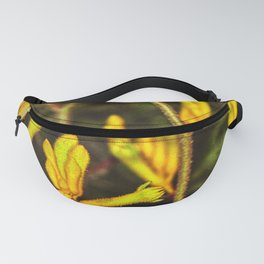 Yellow Kangaroo Paw flower against a blurred background Fanny Pack