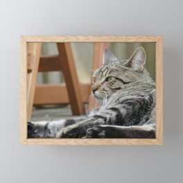 Cat by Frederick Tubiermont Framed Mini Art Print
