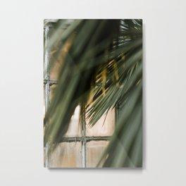 Window Palms Metal Print