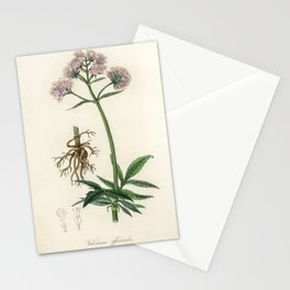 Valerian (Valeriana officinalis) illustration from Medical Botany (1836) by John Stephenson and Jame Stationery Cards