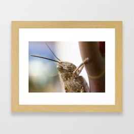 Stripey Eyes Framed Art Print