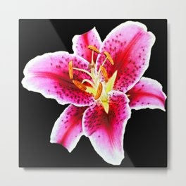 FUCHSIA PINK ASIATIC LILY FLOWER BLACK Metal Print