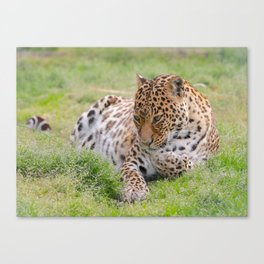 Leopard 2 Canvas Print
