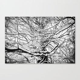 Winter Wonderland 3 Canvas Print