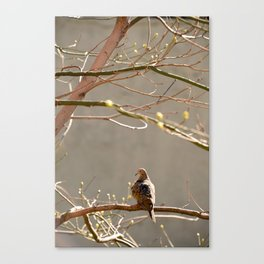 Highline Bird Canvas Print