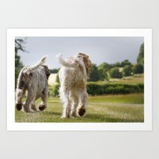 Italian Spinoni Dogs Woody & Ruben Art Print