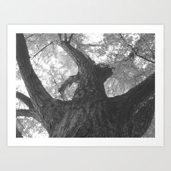 TREEWISE Art Print