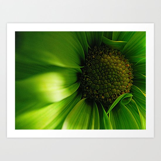 Green Daisy  Art Print