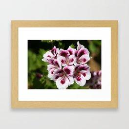 Purple Geraniums Flowers Framed Art Print