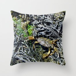 Soft Shell Crab Throw Pillow